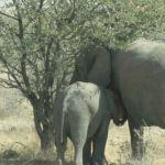 Namibia007