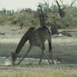 Namibia015