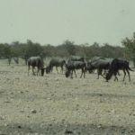 Namibia022