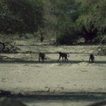 Namibia038