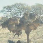 Namibia046